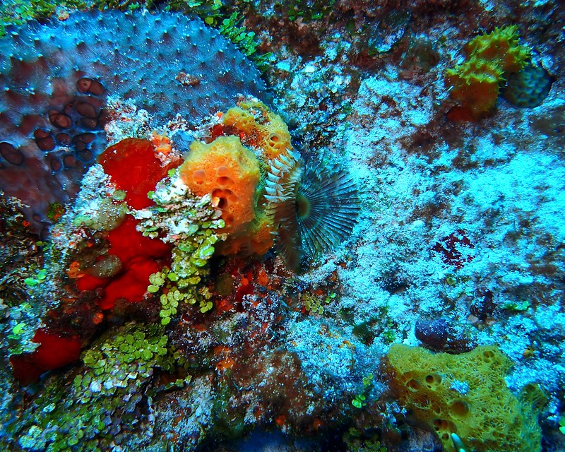 Coral and Feather Duster
