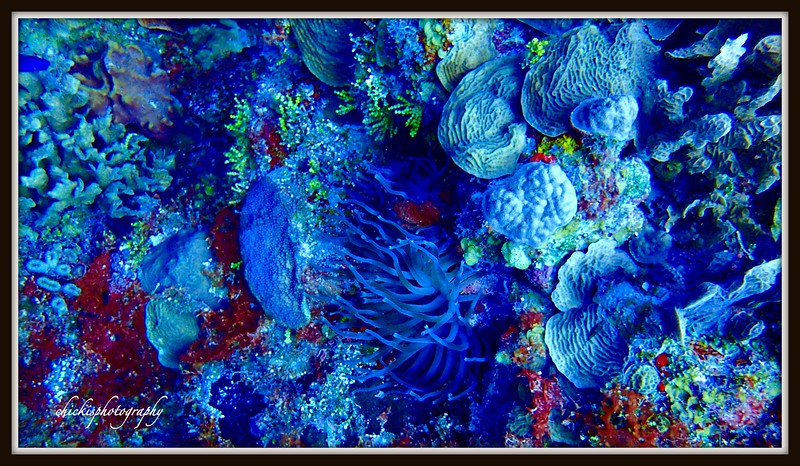 CORAL AND SEA ANEMONE