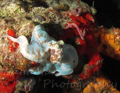 Octopus Change Color