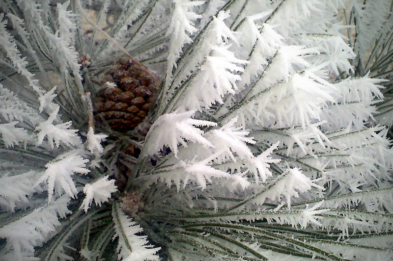 0112 Forgot my camera....  so I used my cell phone to take this picture of the frost on the trees from the fog!