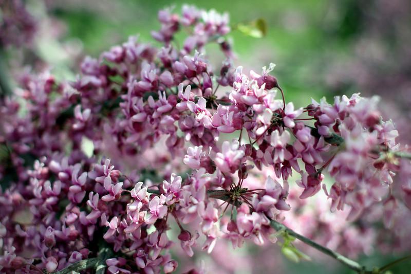 0414 Spring flowers...