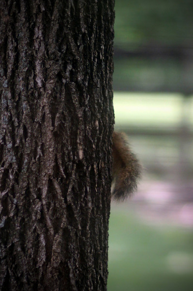 0610 The squirrel did NOT want his picture taken.