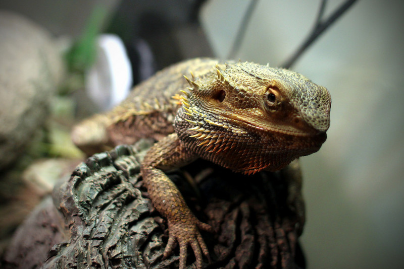 0721 Dragon!