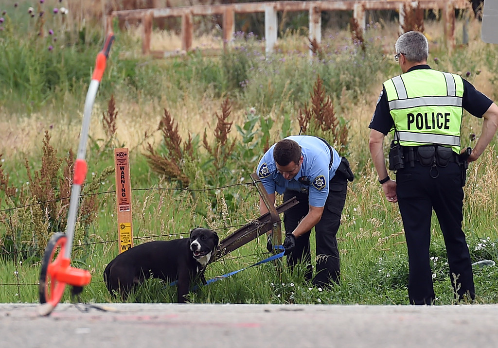 . A Larimer Humane Society animal control officer tries to help a dog tied to a fence post as Loveland Police investigate an accident Friday, July 7. 2017, on U.S. 34 and Larimer Parkway near 25/34 in Loveland. Eight people were transported to the hospital with injuries and west bound U.S. 34 was closed. (Photo by Jenny Sparks/Loveland Reporter-Herald)