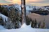 Snowy Trunk