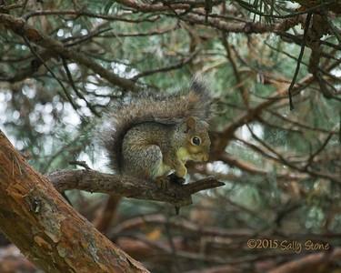 Crazy Squirrel Cuteness