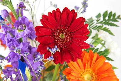 Red Gerbera Daisy with Stock