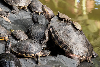 Atocha Train Station Turtles
