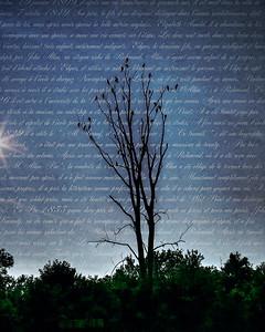 Haunting Tree
