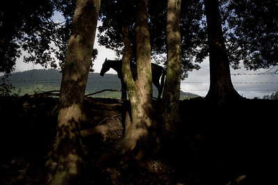 The silohuette of a horse by a creek