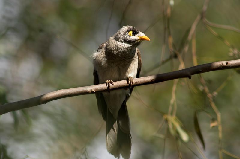 How sweet is the moody little mickey bird