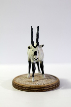 Arabian Oryx model