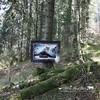 """""""L'esprit de la forêt""""<br> Création personnelle, méthode contemporaine.<br> Cousu machine, matelassé à la machine, 132 x 97 cm, avril 2017."""