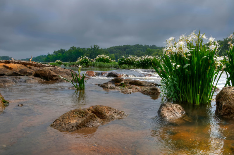 Rocky Shoals Spider Lilies HDR III<br /> © Sparkle Clark