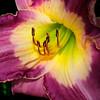 Soft Petal<br /> © Sparkle Clark