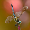 Dragonfly Colors<br /> © Sparkle Clark