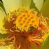 Lotus pod<br /> © Sparkle Clark