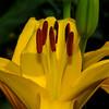 Yellow 3<br /> © Sparkle Clark