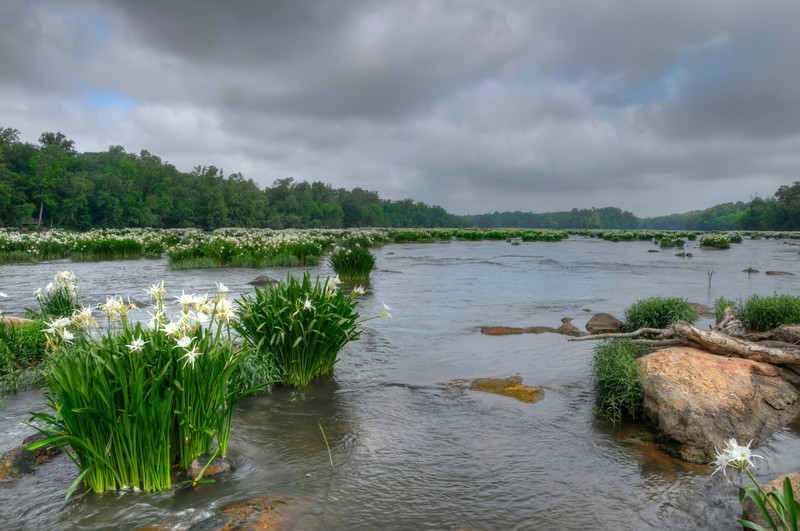 Rocky Shoals Spider Lilies HDR II<br /> © Sparkle Clark