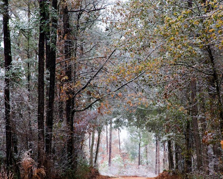 Turkey Track Lane in Snow<br /> © Sparkle Clark