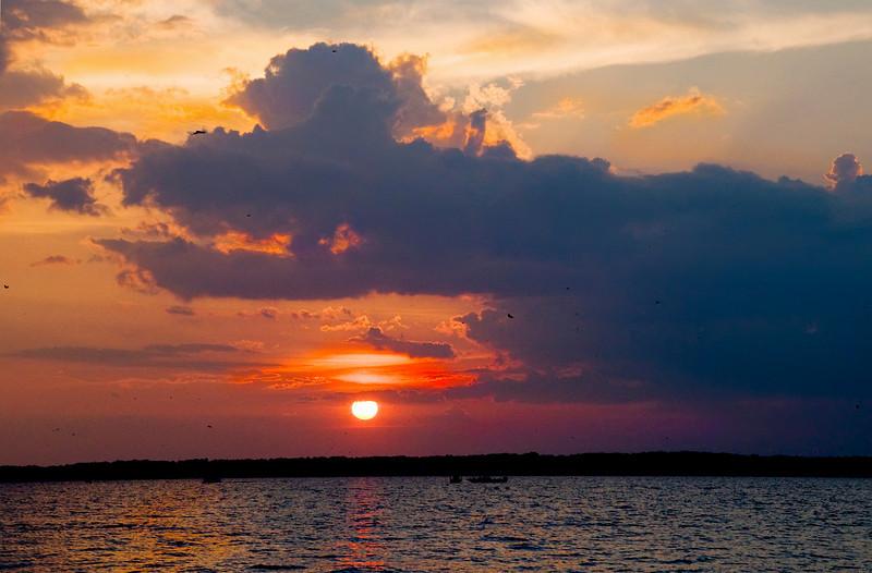 Purple Martin Sunset III<br /> © Sparkle Clark
