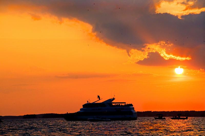 Purple Martin Sunset II<br /> © Sparkle Clark