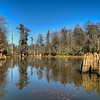 Near Low Falls Landing<br /> A Cypress Cove<br /> © Sparkle Clark
