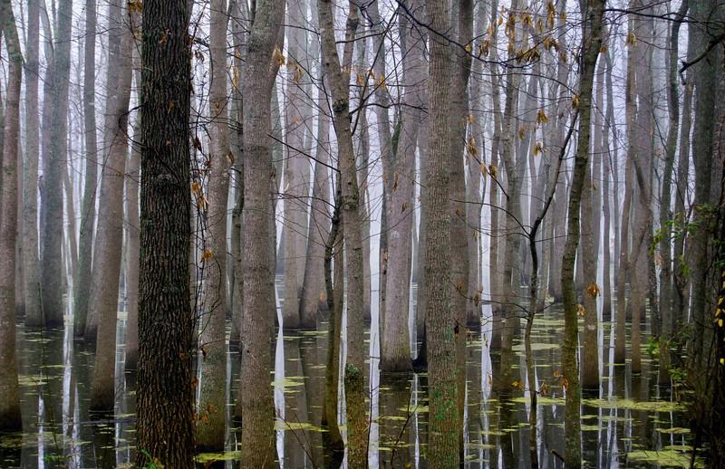 Wetlands in Morning Fog<br /> Richland County<br /> © Sparkle Clark