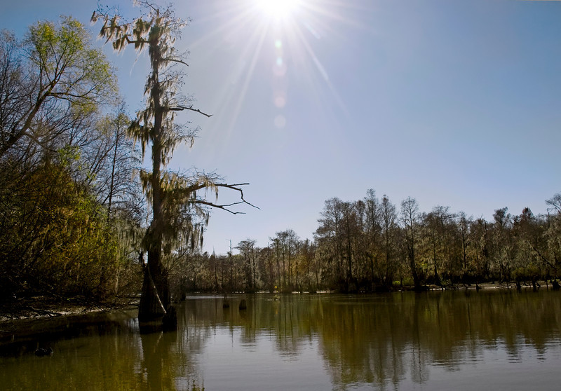 Near Low Falls Landing<br /> Afternoon Glare in the Cypress Swamp<br /> © Sparkle Clark