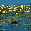 Lake of Lotus<br /> © Sparkle Clark
