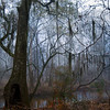 Beckham Swamp in Fog<br /> © Sparkle Clark