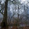 Beckham Swamp in Fog<br /> © Sparkle Clark