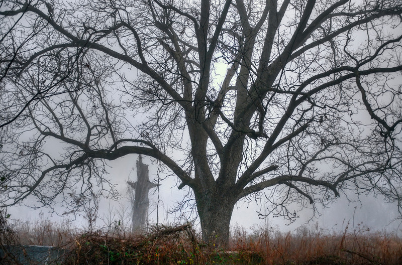 Foggy Morning <br /> White House Road<br /> © Sparkle Clark