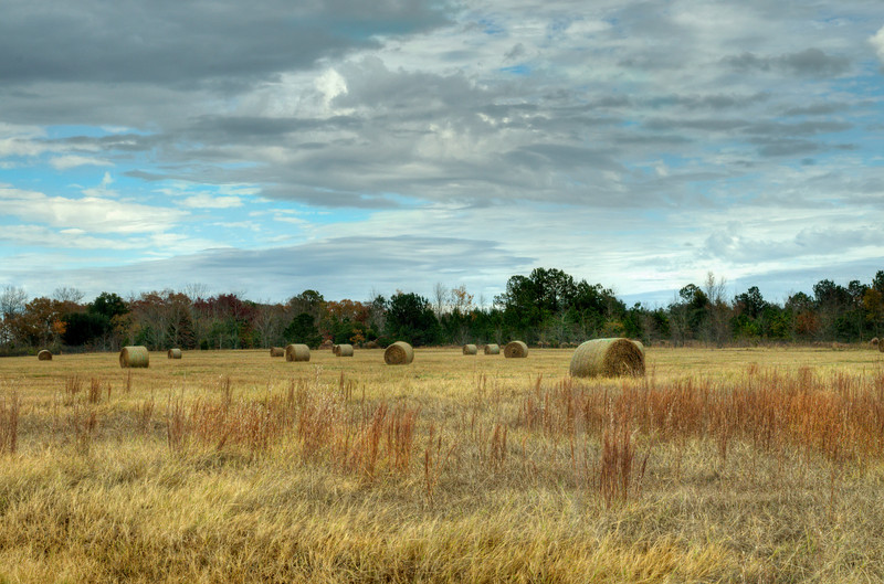 Rural Aiken County, SC<br /> A sea of hay bales<br /> © Sparkle Clark