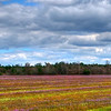 Fields of Clover in HDR<br /> © Sparkle Clark