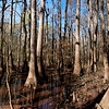 Congaree National Park in November<br /> © Sparkle Clark