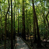 Late Afternoon Shadows on the Lower Boardwalk<br /> Congaree National Park<br /> © Sparkle Clark