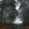 Beckham Swamp Road in Fog<br /> © Sparkle Clark