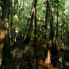 Swamp Reflections, Late Afternoon<br /> Congaree National Park<br /> © Sparkle Clark