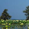 Lotus lakescape II<br /> © Sparkle Clark