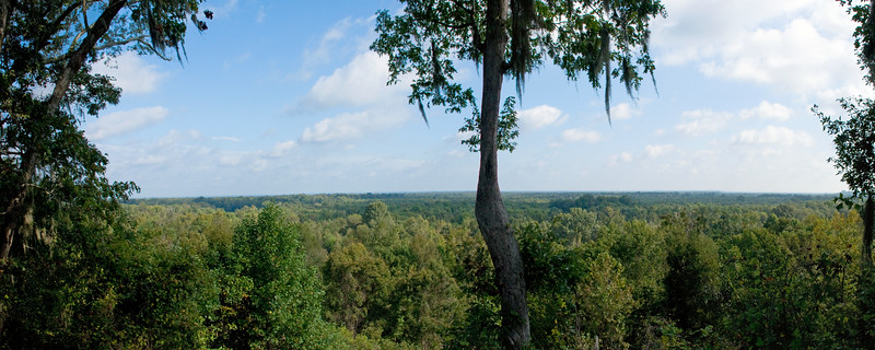 View from Congaree Bluff Heritage Preserve Observation Deck<br /> © Sparkle Clark