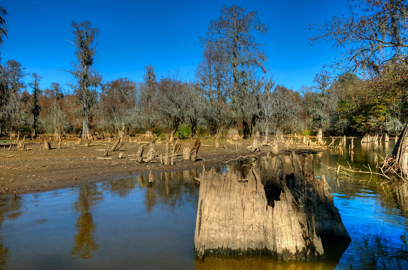Near Low Falls Landing<br /> A Cypress Cove in low water<br /> © Sparkle Clark