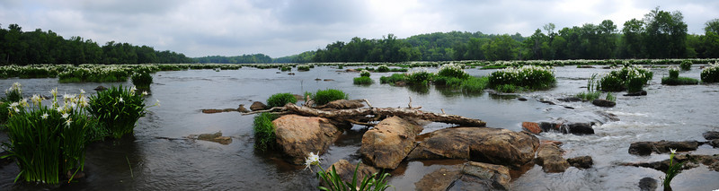 Landsford Canal State Park Rocky Shoals Spider Lilies on the Catawba River<br /> © Sparkle Clark