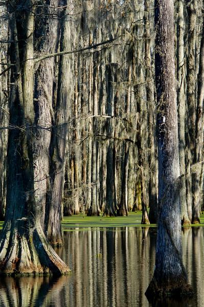 The Wetlands<br /> © Sparkle Clark