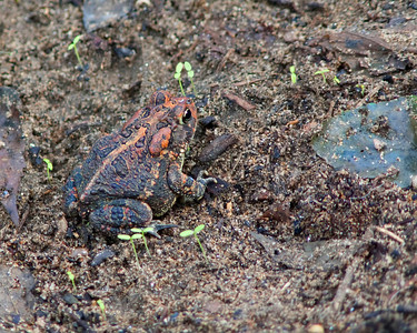 A Toad on the Lower Path © Sparkle Clark