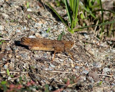 Grasshopper in the underbrush © Sparkle Clark