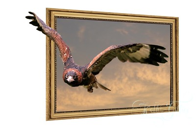 framed flight