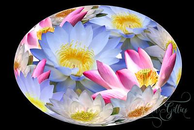 water liliesoval