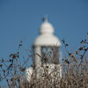 A lighthouse behind some dried shrubs, with a blue sky as a backdrop.