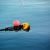 A pink small buoy attached to a yellow buoy and rope at sea. Tranquil sea with reflections.